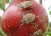 Stink Bug Invasion!