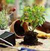 Repotting Your Home Garden on a Shoestring Budget