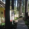 Black Bear Cottages Review - Unexpected Luxury