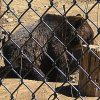 Moonridge Animal Park in Big Bear Review