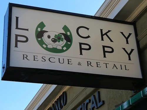 Lucky Puppy A Store With A Different Bark Splash Magazines Los