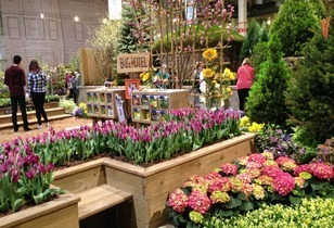 The 2015 Flower and Garden Show – Spring Blooms in Chicago