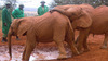 Sheldrick Wildlife Trust - An Elephant Knows When There Is Love In Your Heart (Part 2 of 3)
