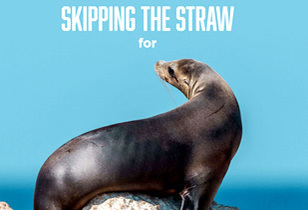 Shedd the Straw Campaign – A Movement that began at the Shedd Aquarium