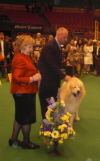Westminster Annual Dog Show Maxes Out Again in NYC