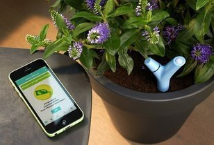 Parrot's Flower Power sensor keeps your garden lush
