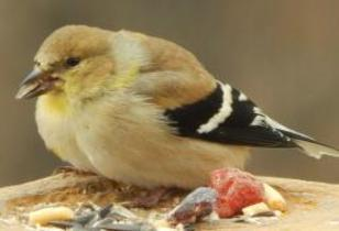 Not All Birds Migrate - How To Attract Resident Birds To Your Backyard This Winter