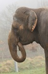 Bob Barker Spearheads New ADI Campaign to End Elephant Suffering at Fairs