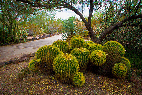 The Desert Botanical Garden Includes Over 50,000 Plants Of More Than 2,600  Different Types From The Worldu0027s Deserts Set On 145 Acres At The Foot Of  Picket ...
