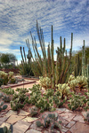 Desert Botanical Garden Review – Defrosting in Cacti Splendor