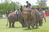 Thailand - King's Cup Elephant Polo!