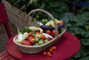 Sure Grow Guidance for First Time Gardeners – Bring Fresh Foods to Your Table