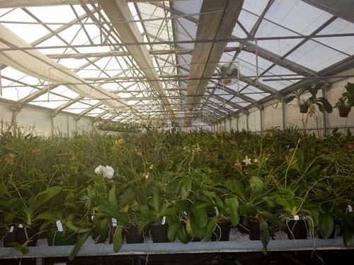 One Room Of Orchids Being Boarded