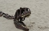 Travel Alberta Excavates an Albertosaurus on the Beaches of Santa Monica, CA