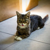 Lil Bub is coming to spcaLA! - Celebrity Cat Hosted Fundraiser