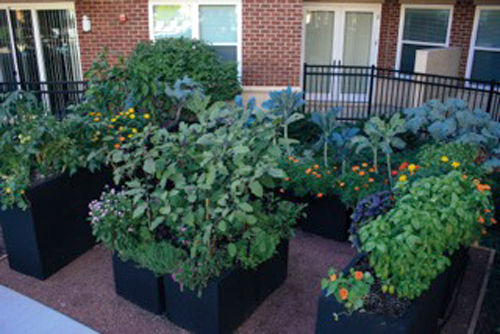The Organic Gardener Ltd. Uses Planter Boxes With Built In Irrigation To  Maintain A Variety Of Vegetables, Herbs, And Cut Flowers At AMLI Deerfield  ...