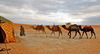 Traveling to Morocco – How to Spend a Night in the Sahara Desert