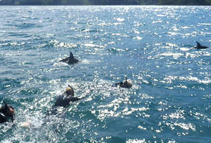 E-Ko Tours Swim with Dolphins Review – Best Up-Close Experience of Dolphins in New Zealand