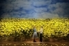 BIG FISH with Broadway In Chicago, Theatre Review - Why a Musical?