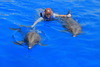 The Best of Puerto Vallarta Rewiew - Dolphins and Dining