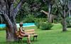 KONGONI LODGE at Kenya's Lake Naivasha Review – A Wonderland You Will Never Want to Leave