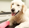 Pet Insurance: Worth It or Not?