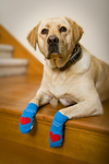 Add to Fido's Health and Happiness with Power Paws Canine Socks