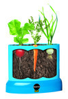 Miracle-Gro Kids Root Viewer