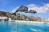 Cabo Dolphins Review - A Magical and Moving Experience