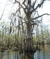 Cajun Encounters Swamp Tour Review –  A Unique New Orleans Attraction