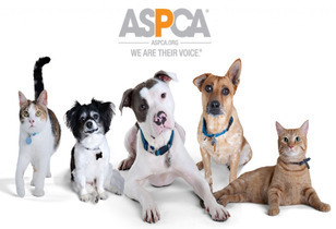 The ASPCA Grants Nearly $1 Million -  Encourage and Facilitating Pet Adoptions in Los Angeles