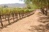 Agua Dulce Winery Review - A Treasure