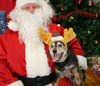 Top 5 Gifts for Your Dog This Christmas