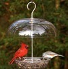 Bird Feeding Tips - Five Faux Pas to Avoid