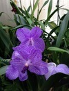 Brookside Nursery Review – Beautiful Orchids can be Purchased or Boarded