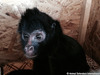 Animal Defenders International (ADI) Helps - Lonely Monkey Finds His Val-entine