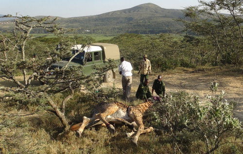 animal rights reserved urgent care for wildlife in kenya