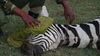 ANIMAL RIGHTS RESERVED--Urgent Care For Wildlife in Kenya