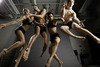 Ballet X Review – Raising the Barre with Strength and Grace