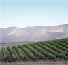 SAVOR the Central Coast 2011 - Held September 29 Through October 2, is Set to Include a Host of New Activities