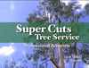 Super Cuts Trees Service Review  - Mike Murphy and Crew are A Cut above the Rest