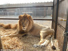 Huge Rescue Mission Launched in Peru to Save Suffering Circus Animals