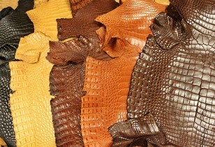 4 Great Reasons to Use Caiman Leather for Exotic Leather Projects