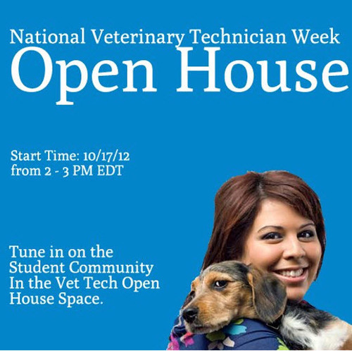 path to veterinary technician Veterinary technician schools in oregon  board approval is essential for this particular path those who do not earn a degree from a board-approved program may be required to verify on-the-job training hours in addition to whatever degree they earn this training requirement ranges from 1500 hours for those with a bachelor's degree in a.