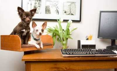 Kitt-In Box lets your dog hang out with you while you work!