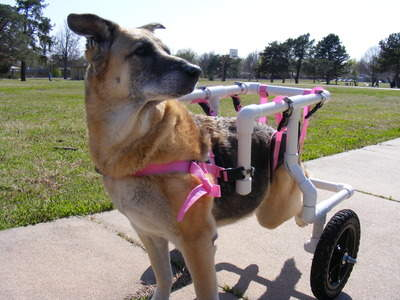 Large Dog Wheelchair (Pink)