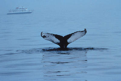 During the winter months, fin and humpback whales migrate along the Virginia Beach coastline. Virginia Beach offers whale watching getaway packages from January through March.
