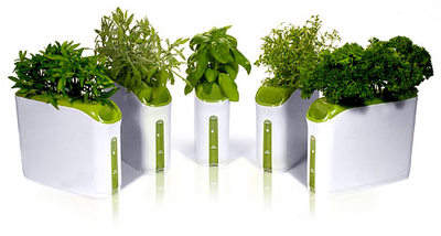 Power Plant Herb Garden