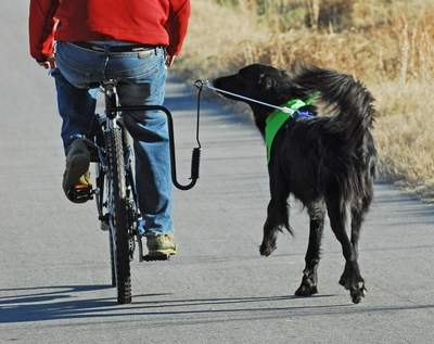 Biker Rides with Best Buddy