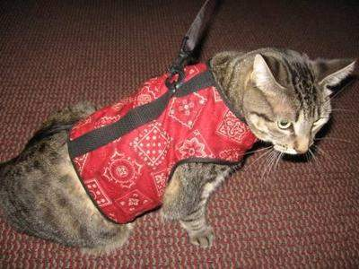The Kitty Holster is comfortable, soft, made of cotton and comes in five colors.